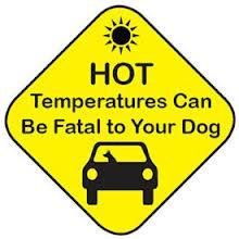 manchaca garage - hot temps no good for dogs